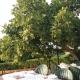 75_20200724100731_terrazza.jpg