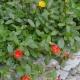 I4447_20190710230711_Posteggio_e_giardino_8.jpg