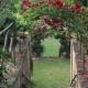 I5121_20210510110524_giardino_rosascarlatta_e1551809374491.jpg